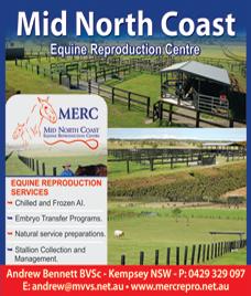 mid north coast